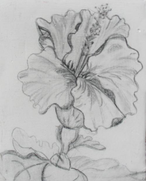 Hibiscus 03x04 pencil true gesso